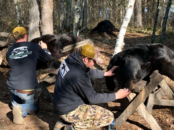 Gearing up for another busy Spring Bear Season