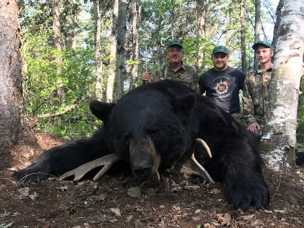 2017 Giant Fall Black Bear