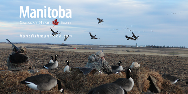 Manitoba's Waterfowl Mecca